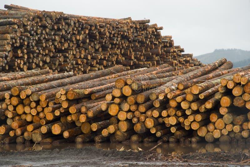 Troncs d'arbre en bois de pile de rondin de moulin de bois de charpente attendant le traitement images libres de droits