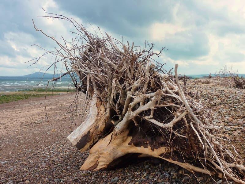 Troncs d'arbre lavés à terre photos stock