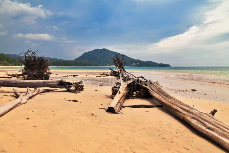 Troncs d'arbre morts sur la plage photo stock