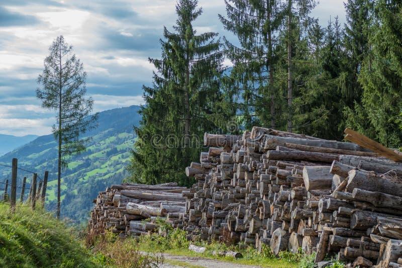 Troncs d'arbre sciés photos libres de droits