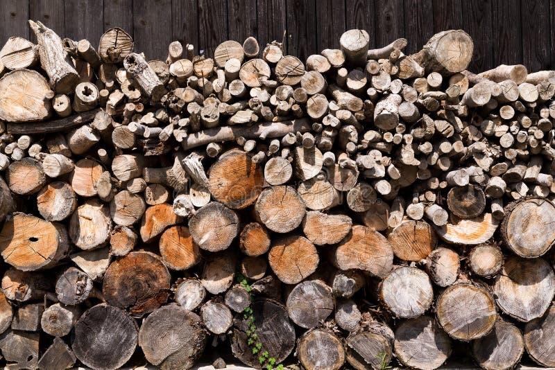 Troncs de rondin de pins de forêt image stock