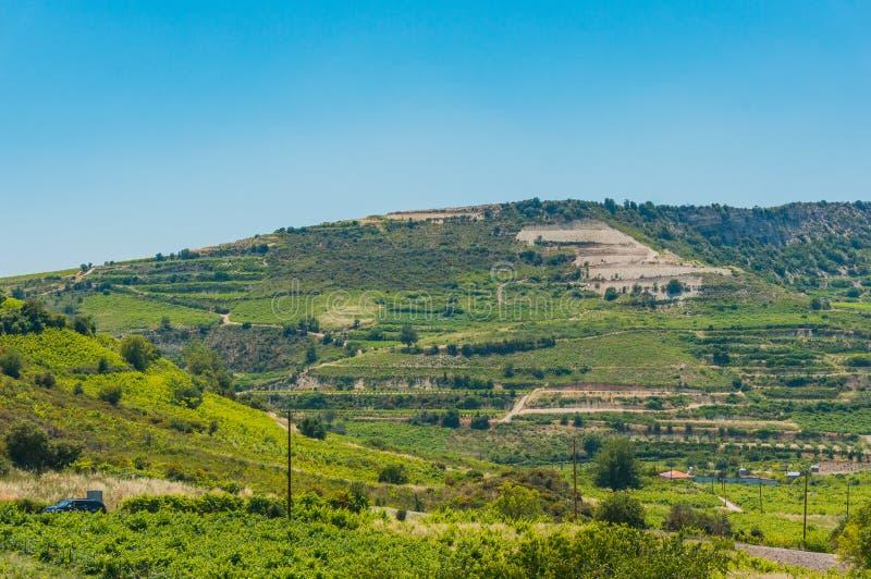 Troodos山的倾斜的葡萄园 在塞浦路斯的晴朗的夏日 免版税库存照片