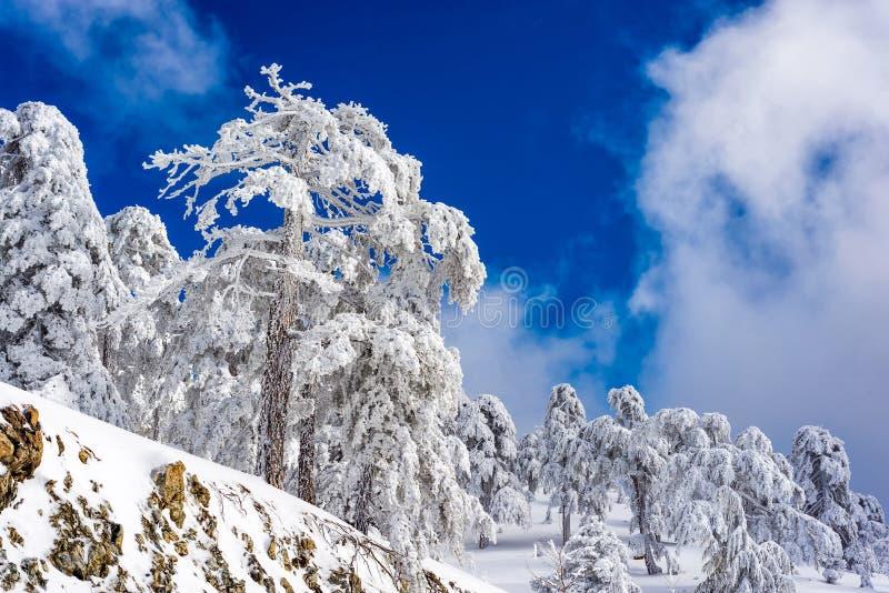 Troodos-Berg im Winter zypern stockbild
