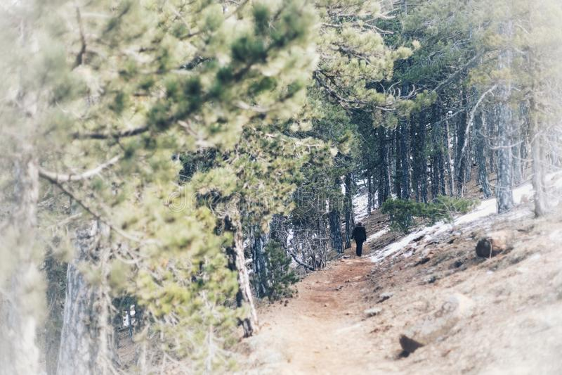 Troodos Forest Park national - hausse du jour photos libres de droits