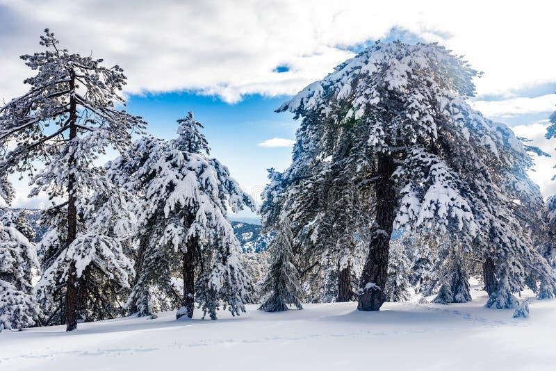 Troodos jest wielkim pasmem górskim w Cypr fotografia royalty free