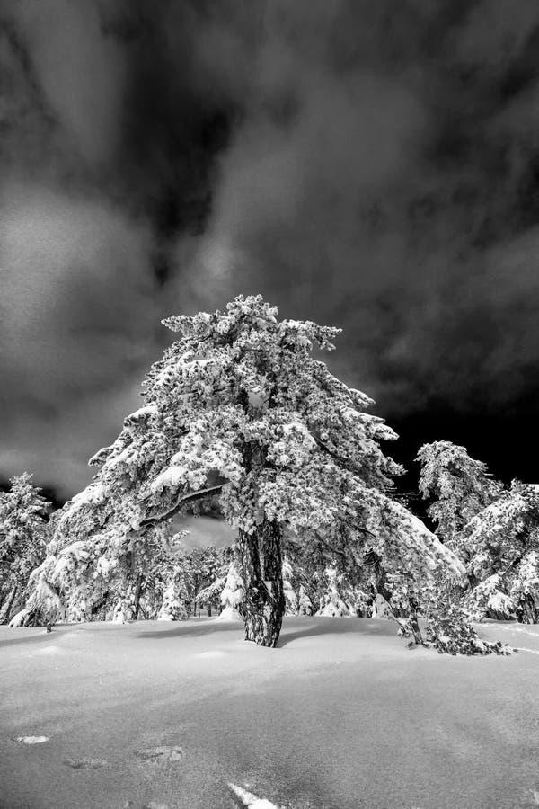 Troodos jest wielkim pasmem górskim w Cypr zdjęcia stock