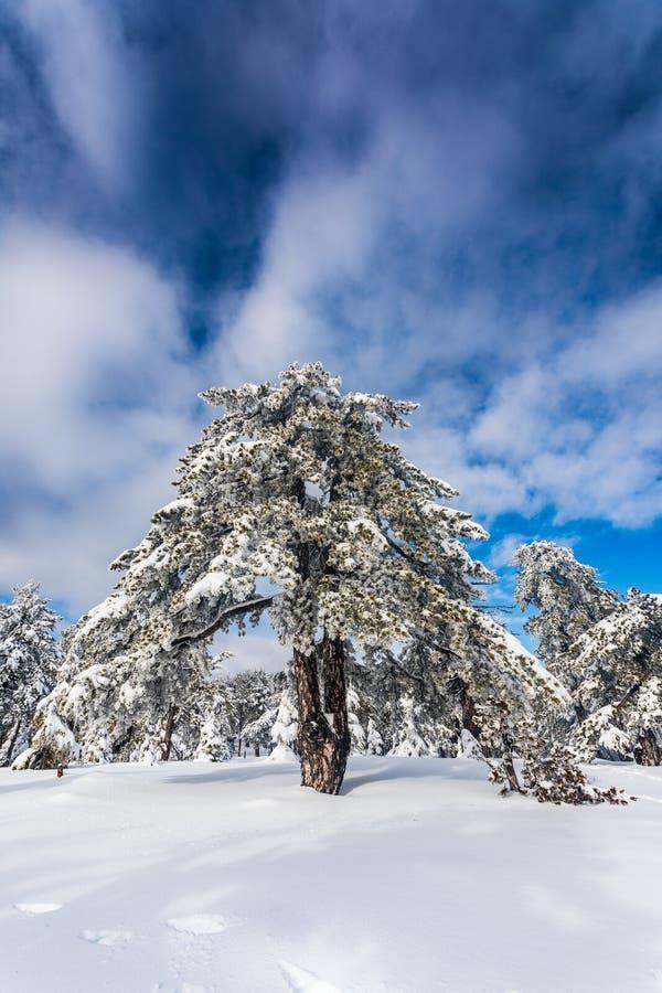 Troodos jest wielkim pasmem górskim w Cypr obrazy stock