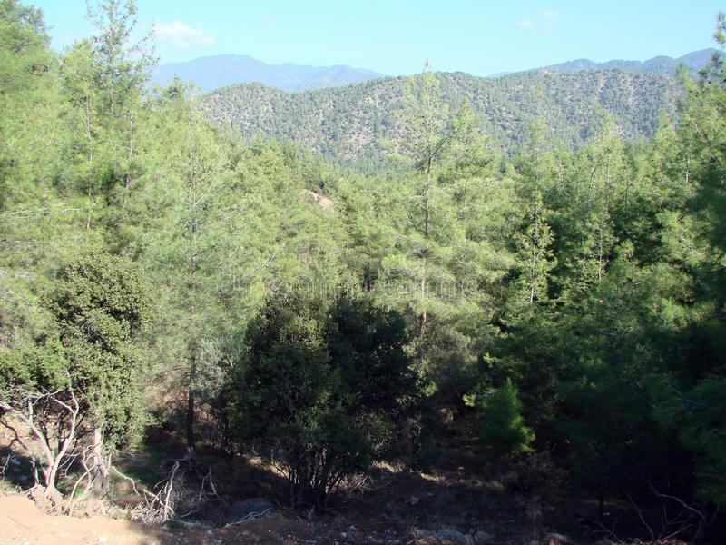 Troodos Mountains Cyprus. Landscapes of mountain horizons at an altitude of 500 m above sea level. Natural picture of a young mountain green forest with stock image