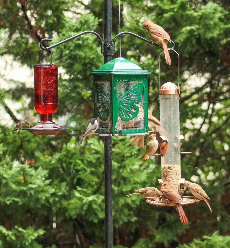 Trop d'oiseaux ? photos stock