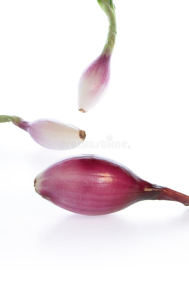 tropea κρεμμυδιών στοκ εικόνα