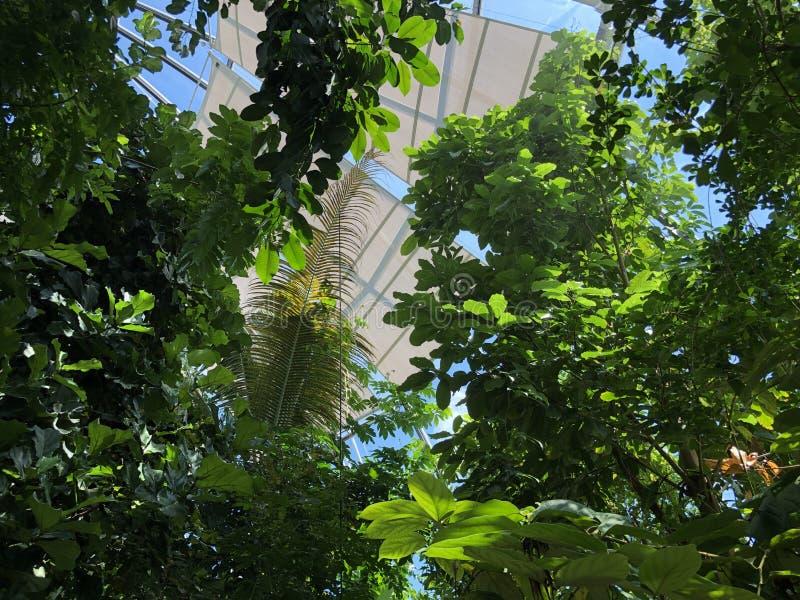 Tropenhaus, floresta tropical da montanha ou Tropischer Bergwald - jardim botânico da universidade de Zurique ou de Botanischer G imagem de stock