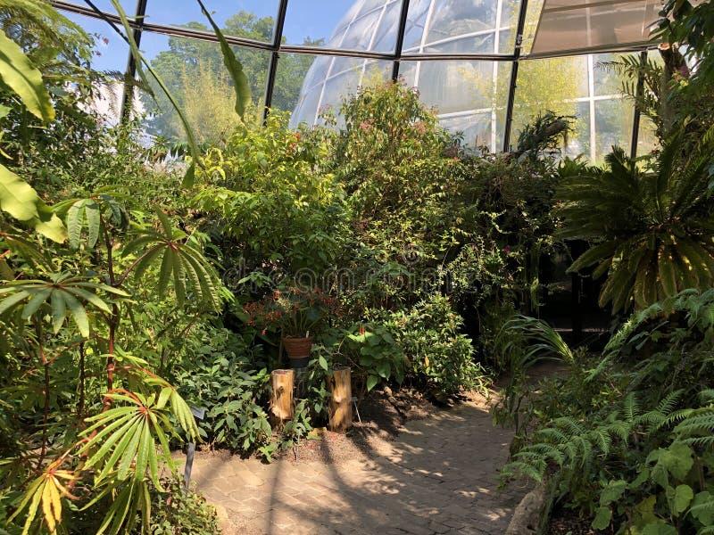 Tropenhaus, forêt de plaine ou Tiefland Wald - jardin botanique de l'université du der Universitaet de Zurich ou de Botanischer G image libre de droits