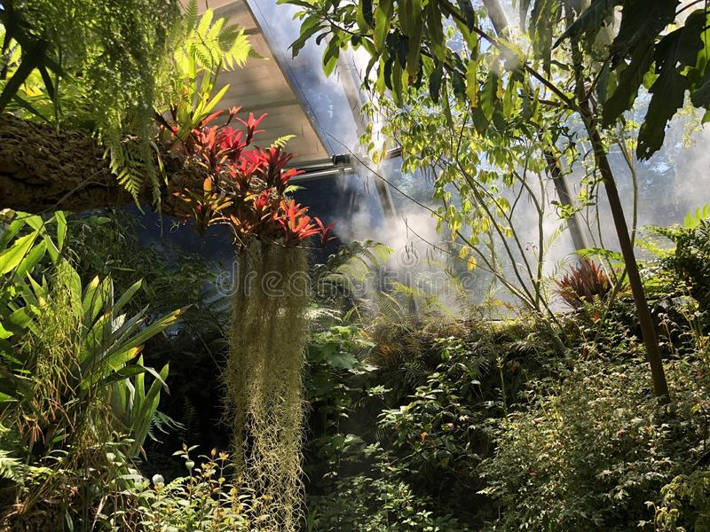 Tropenhaus, forêt de plaine ou Tiefland Wald - jardin botanique de l'université du der Universitaet de Zurich ou de Botanischer G photographie stock libre de droits