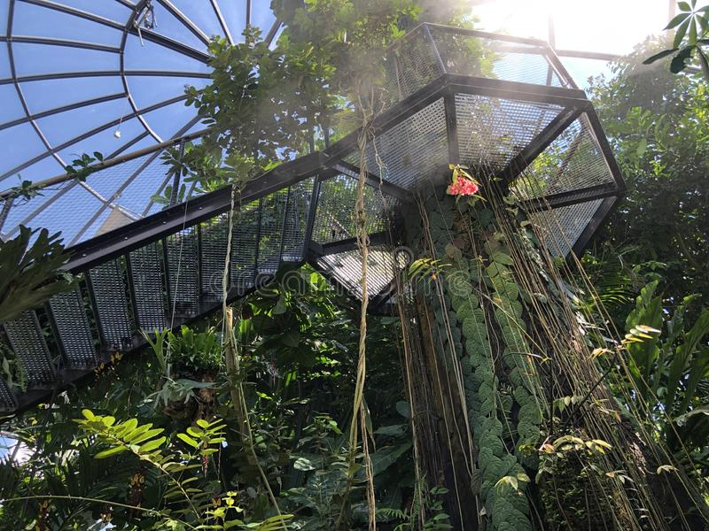 Tropenhaus, forêt de plaine ou Tiefland Wald - jardin botanique de l'université du der Universitaet de Zurich ou de Botanischer G images libres de droits