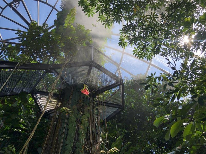Tropenhaus, forêt de plaine ou Tiefland Wald - jardin botanique de l'université du der Universitaet de Zurich ou de Botanischer G photo libre de droits