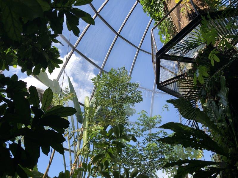 Tropenhaus, forêt de plaine ou Tiefland Wald - jardin botanique de l'université du der Universitaet de Zurich ou de Botanischer G images stock