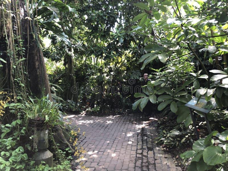 Tropenhaus, forêt de plaine ou Tiefland Wald - jardin botanique de l'université du der Universitaet de Zurich ou de Botanischer G photos libres de droits