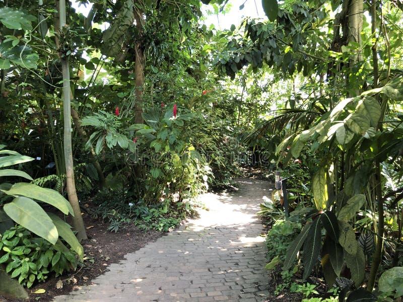 Tropenhaus, forêt tropicale de montagne ou Tropischer Bergwald - jardin botanique de l'université de Zurich ou de Botanischer Gar photos stock