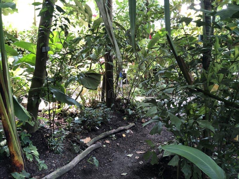 Tropenhaus, forêt tropicale de montagne ou Tropischer Bergwald - jardin botanique de l'université de Zurich ou de Botanischer Gar images stock