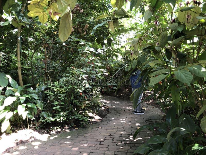Tropenhaus, forêt tropicale de montagne ou Tropischer Bergwald - jardin botanique de l'université de Zurich ou de Botanischer Gar image libre de droits