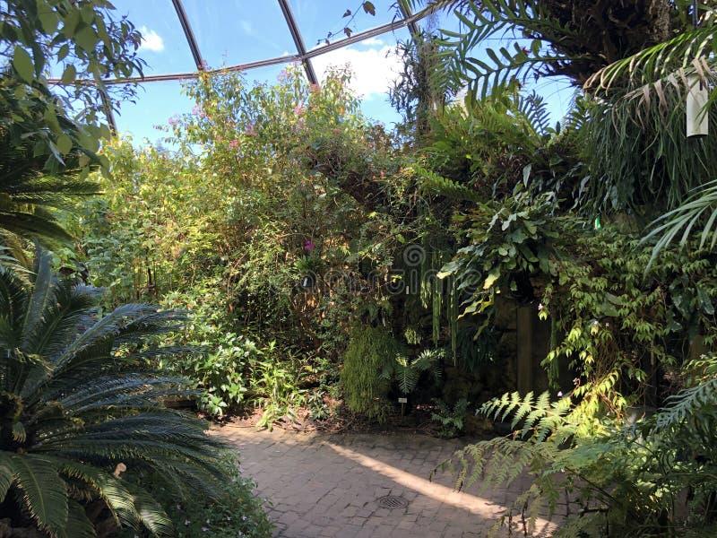 Tropenhaus, forêt tropicale de montagne ou Tropischer Bergwald - jardin botanique de l'université de Zurich ou de Botanischer Gar photographie stock libre de droits