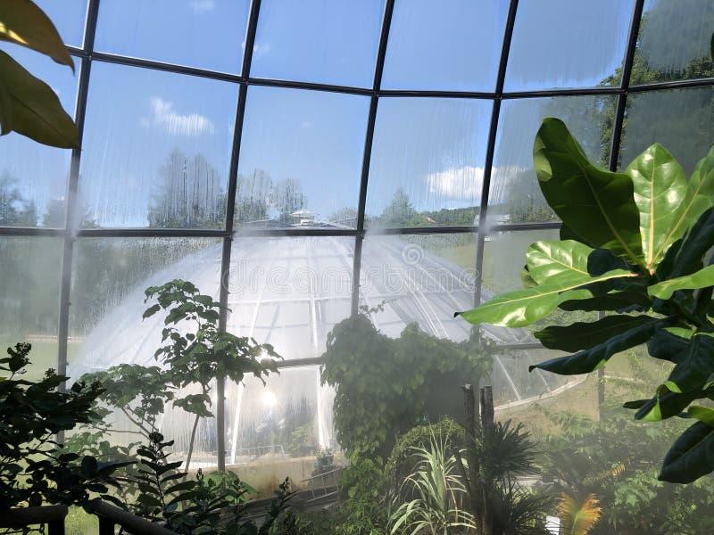 Tropenhaus, forêt tropicale de montagne ou Tropischer Bergwald - jardin botanique de l'université de Zurich ou de Botanischer Gar photos libres de droits