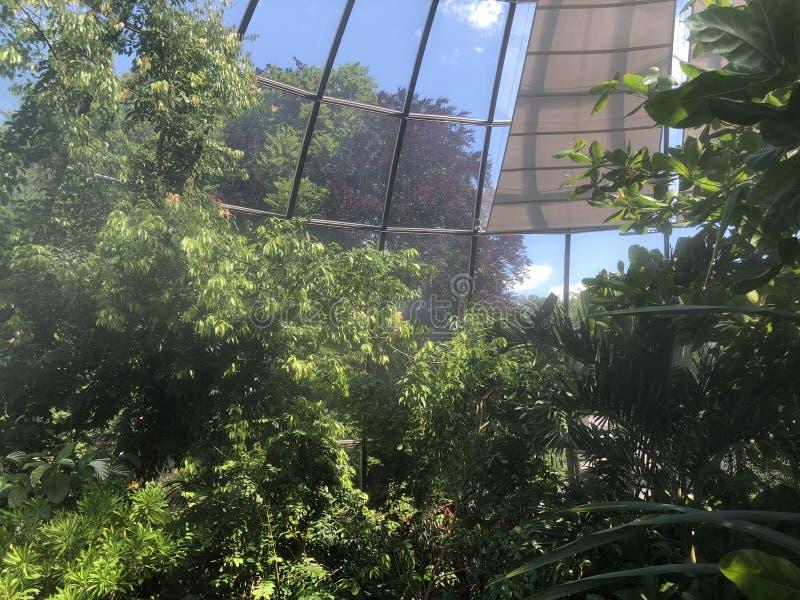 Tropenhaus, forêt tropicale de montagne ou Tropischer Bergwald - jardin botanique de l'université de Zurich ou de Botanischer Gar images libres de droits