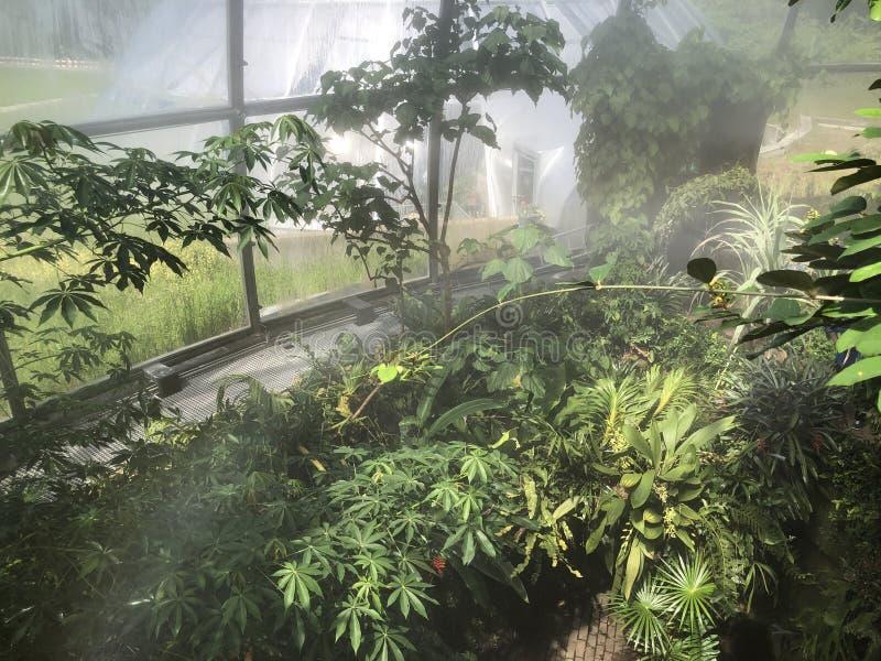 Tropenhaus, forêt tropicale de montagne ou Tropischer Bergwald - jardin botanique de l'université de Zurich ou de Botanischer Gar photo libre de droits