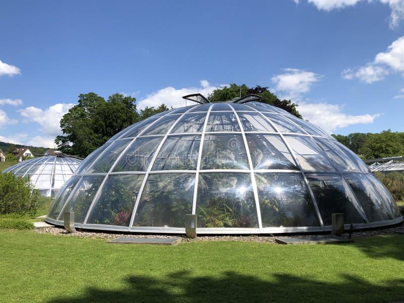 Tropenhaus - jardin botanique de l'université du der Universitaet Zurich de Zurich ou de Botanischer Garten images libres de droits
