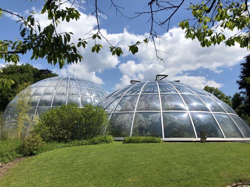 Tropenhaus - jardin botanique de l'université du der Universitaet Zurich de Zurich ou de Botanischer Garten image libre de droits