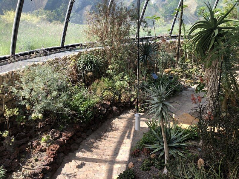 Tropenhaus, Trockengebiete - jardin botanique de l'université du der Universitaet Zurich de Zurich ou de Botanischer Garten image libre de droits