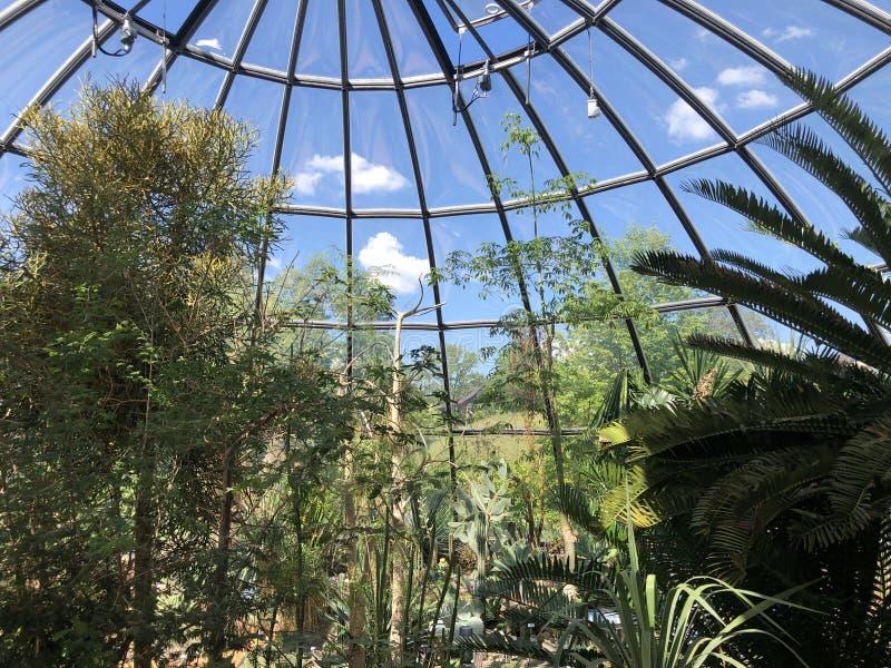 Tropenhaus, Trockengebiete - jardin botanique de l'université du der Universitaet Zurich de Zurich ou de Botanischer Garten photos libres de droits