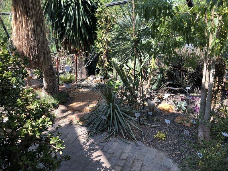 Tropenhaus, Trockengebiete - jardin botanique de l'université du der Universitaet Zurich de Zurich ou de Botanischer Garten photographie stock libre de droits