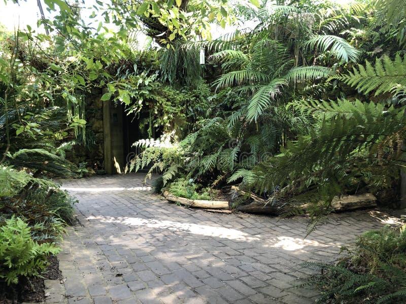 Tropenhaus, Trockengebiete - jardin botanique de l'université du der Universitaet Zurich de Zurich ou de Botanischer Garten photo libre de droits