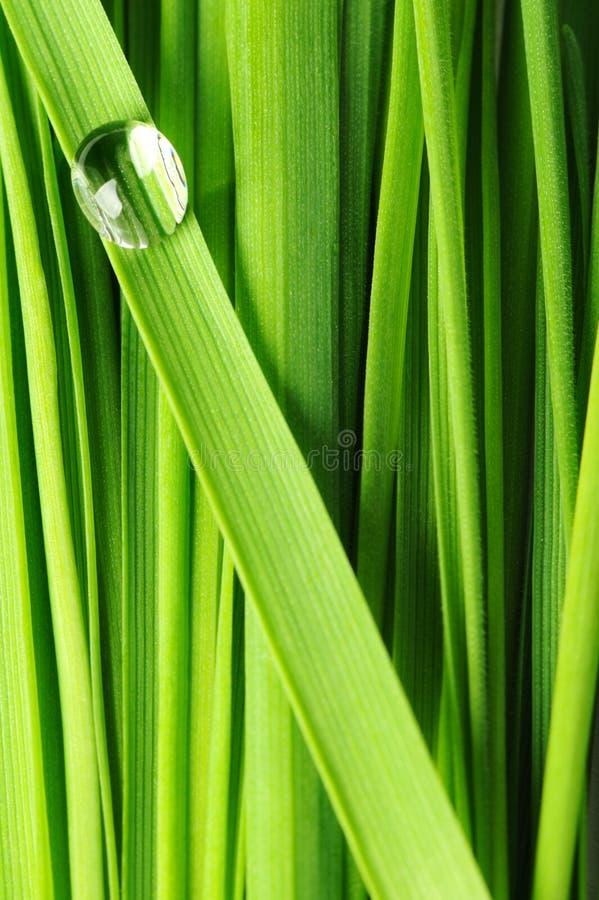 Tropfen auf einem Gras lizenzfreie stockfotografie