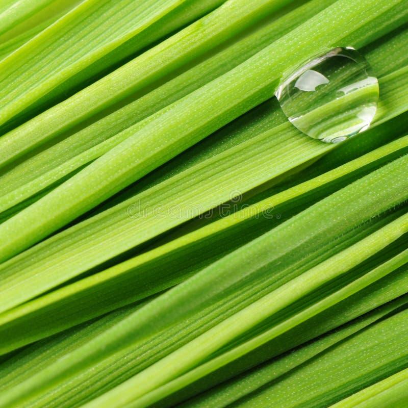 Download Tropfen auf einem Gras stockbild. Bild von nave, tröpfchen - 9088737
