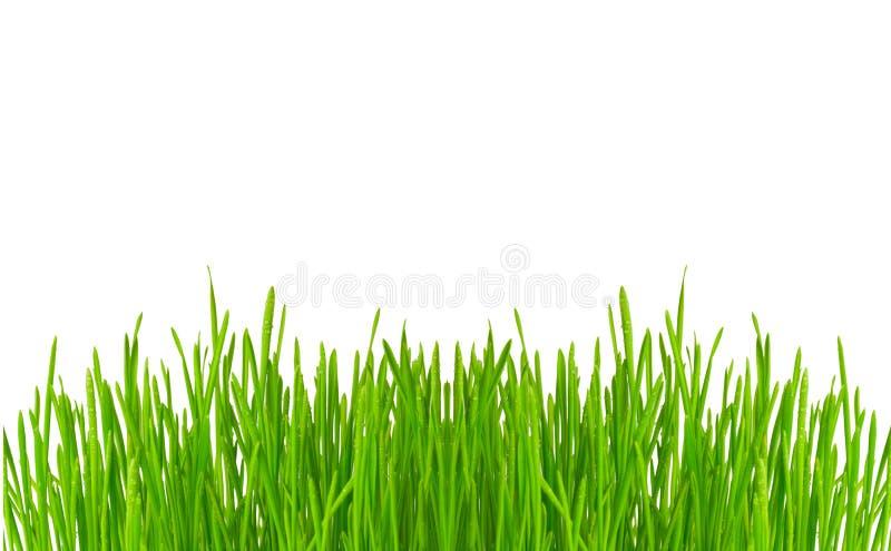 Download Tropfen auf Gras stockfoto. Bild von kondensation, tropfen - 9099900