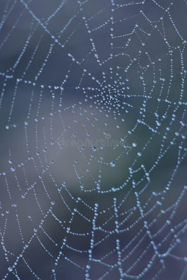 Tropfen auf Spinnenweb stockbild