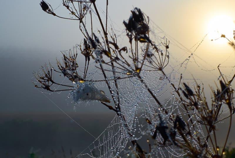 Tropfen des Taus auf dem Spinnennetz stockfoto