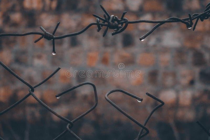 Tropfen-Regen traurig stockfoto