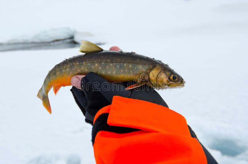Trophée arctique de pêche de truite images libres de droits