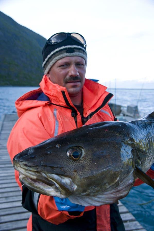 Trophée de pêche - morue photos libres de droits