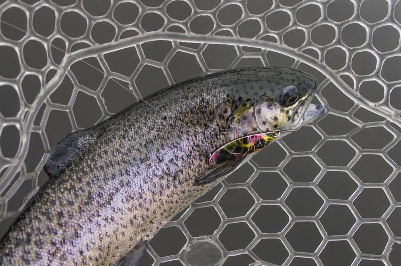 Trophée de poissons de truite dans l'épuisette en caoutchouc photo libre de droits