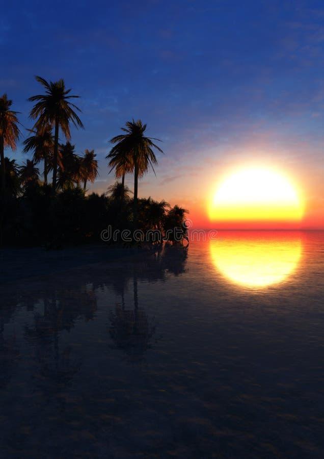 Tropic Environment Sunset royalty free stock photo