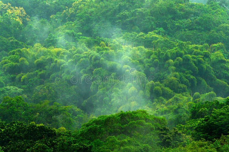 Tropic forest during rainy day. Green jungle landscape with rain and fog. Forest hill with big beautiful tree in Santa Marta, Colo. Mbia stock photo