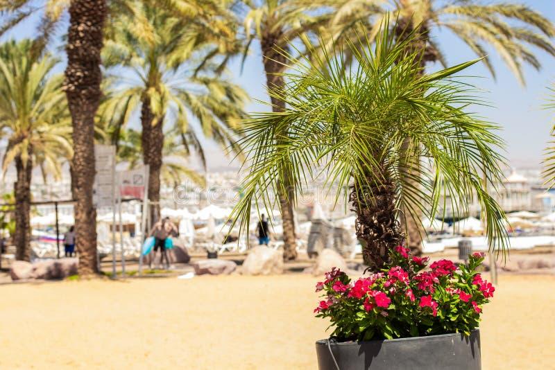 Tropic Garden Stock Photos Download 44 336 Royalty Free Photos