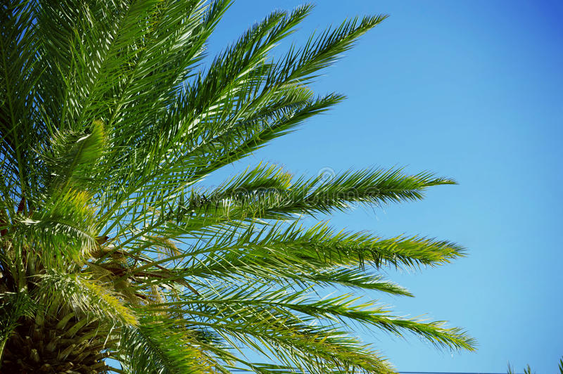 Tropic palm closeup with blue sky background behind stock photo
