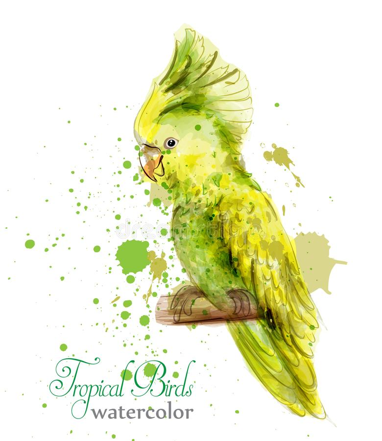 Tropic yellow parrot bird watercolor Vector. Paint splash colorful backgrounds royalty free illustration