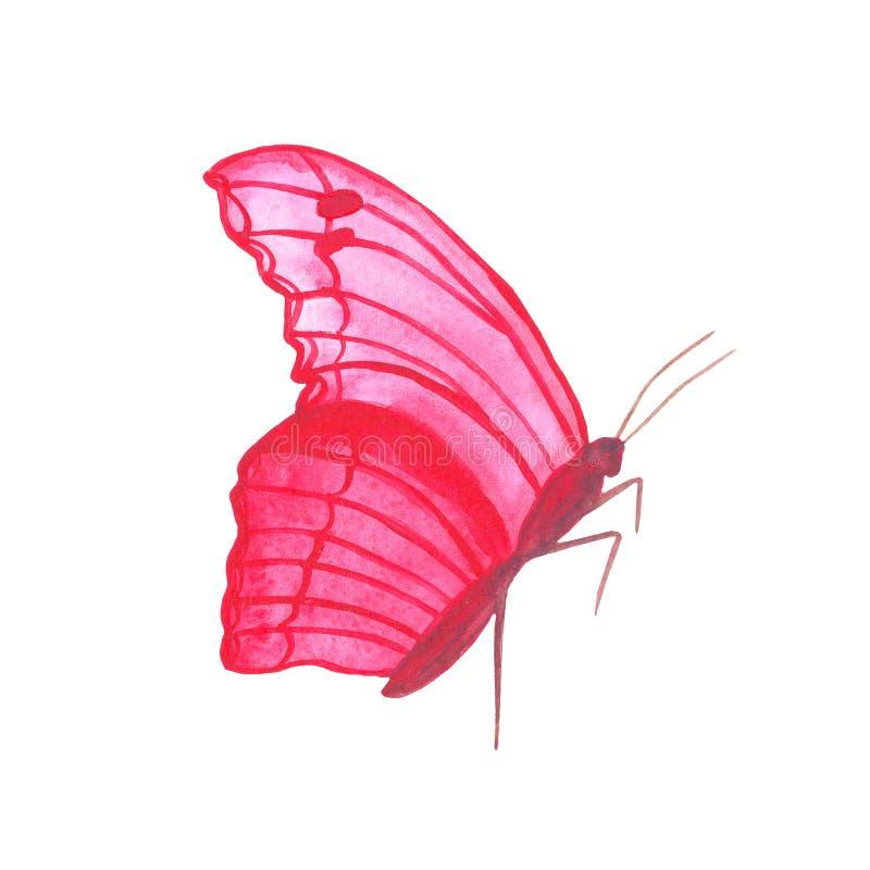 Tropica лета насекомого бабочки пинка акварели красивое бесплатная иллюстрация