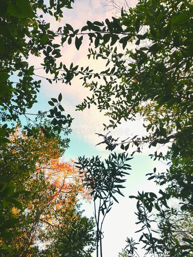 tropical imagenes de archivo